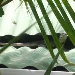 Eine Echse auf dem Hostel Dach