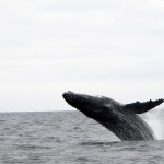 Wale in Porto Lopez