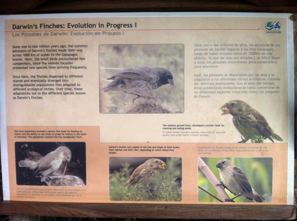 Die unterschiedlichen Finken auf Galapagos
