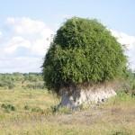 Halbwüste Afrikas