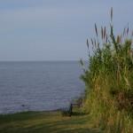 Naturreservat Buenos Aires (Das ist nicht das Meer, sondern der breiteste Fluss der Welt ;) )