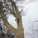 Ein Woodpicker :)