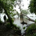 Mittel im Regenwald