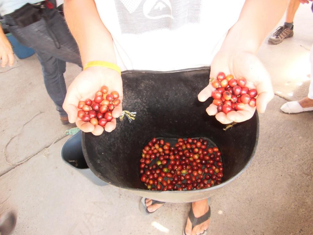 Kaffeedreieck Kolumbiens